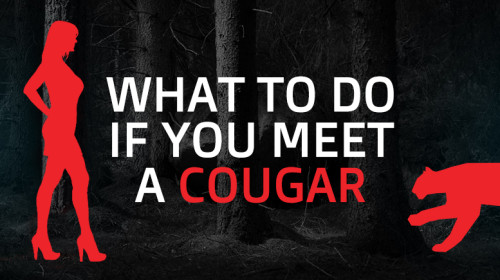 What To Do If You Meet a Cougar