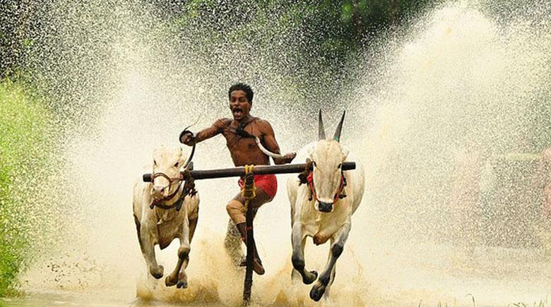 http://adventure-journal.com/wp-content/uploads/2013/04/indian-bull-surfing-660.jpg